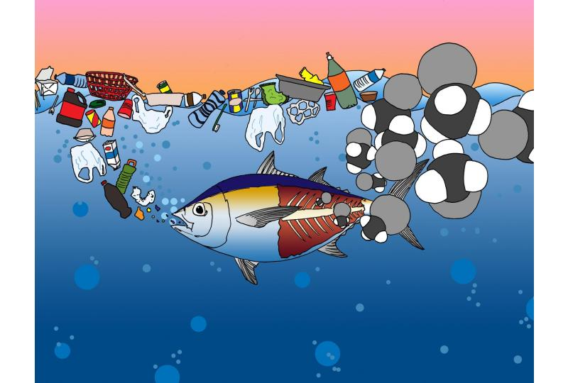 An Unexpected Dinner Guest: Marine Plastic Pollution Hides a Neurological Toxin in Our Food