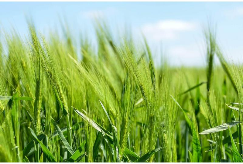 Organic Sustainable Farming is the Future of Agriculture   The Future of Food