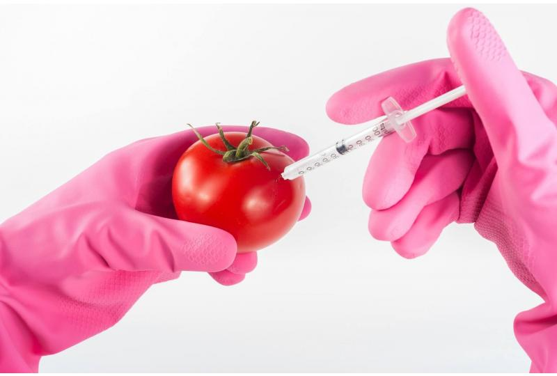 Are GMOs Bad for the Environment?