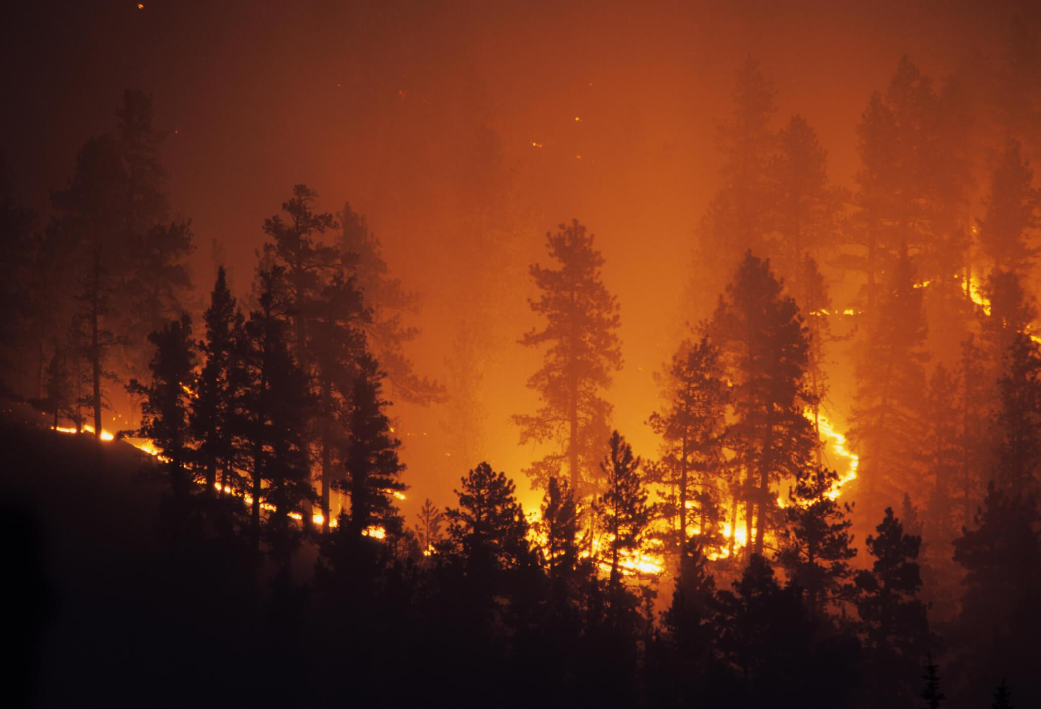 Hit by fires and droughts, California voters call climate change their top priority