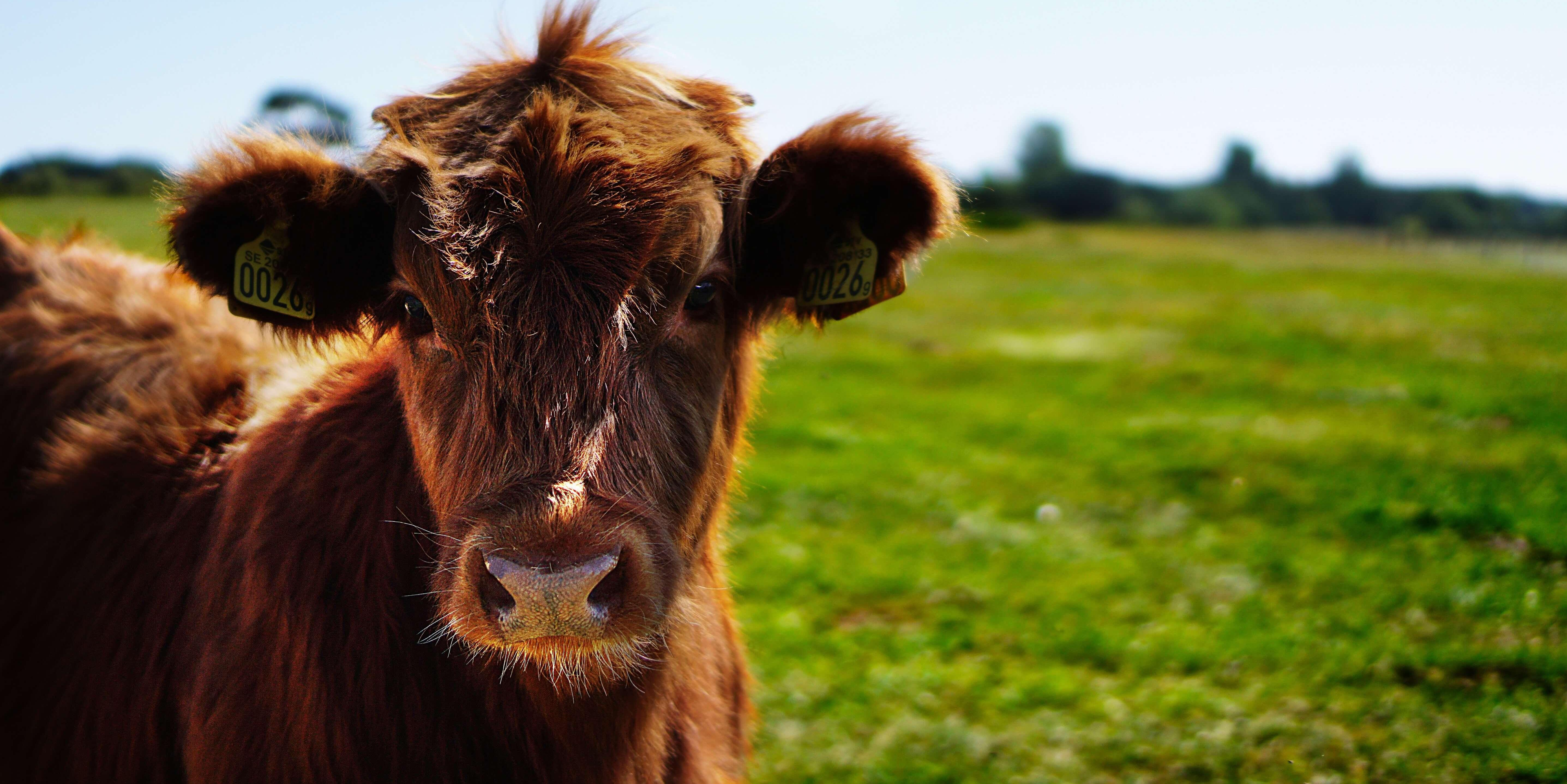 Your 'grass-fed' beef may not have come from a cow grazing in a pasture. Here's why.