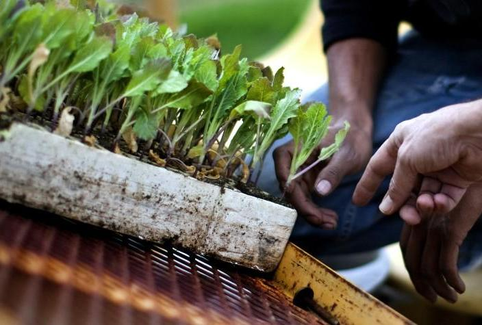 10 things you can do to improve your home garden right now