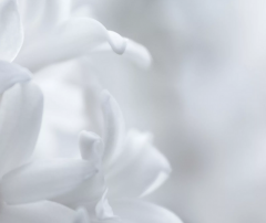 Julia test product #2-white