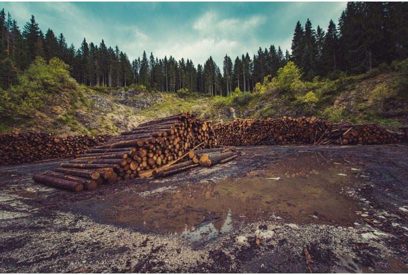 Deforestation Explained
