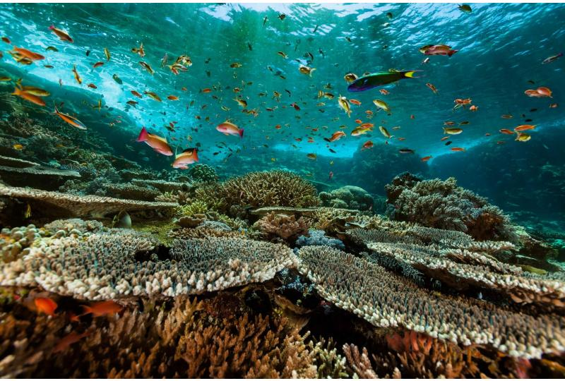 The Great Barrier Reef's corals are struggling to recover fast enough