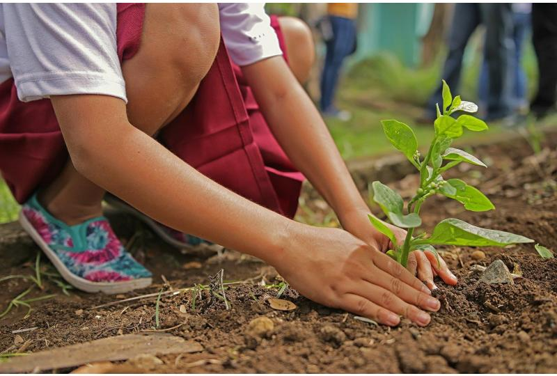 Organic Gardening 101: How to Start Your Own Backyard Garden