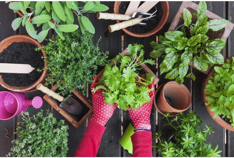 Indoor Gardening: How To Start Growing Your Own Vegetables Inside the House