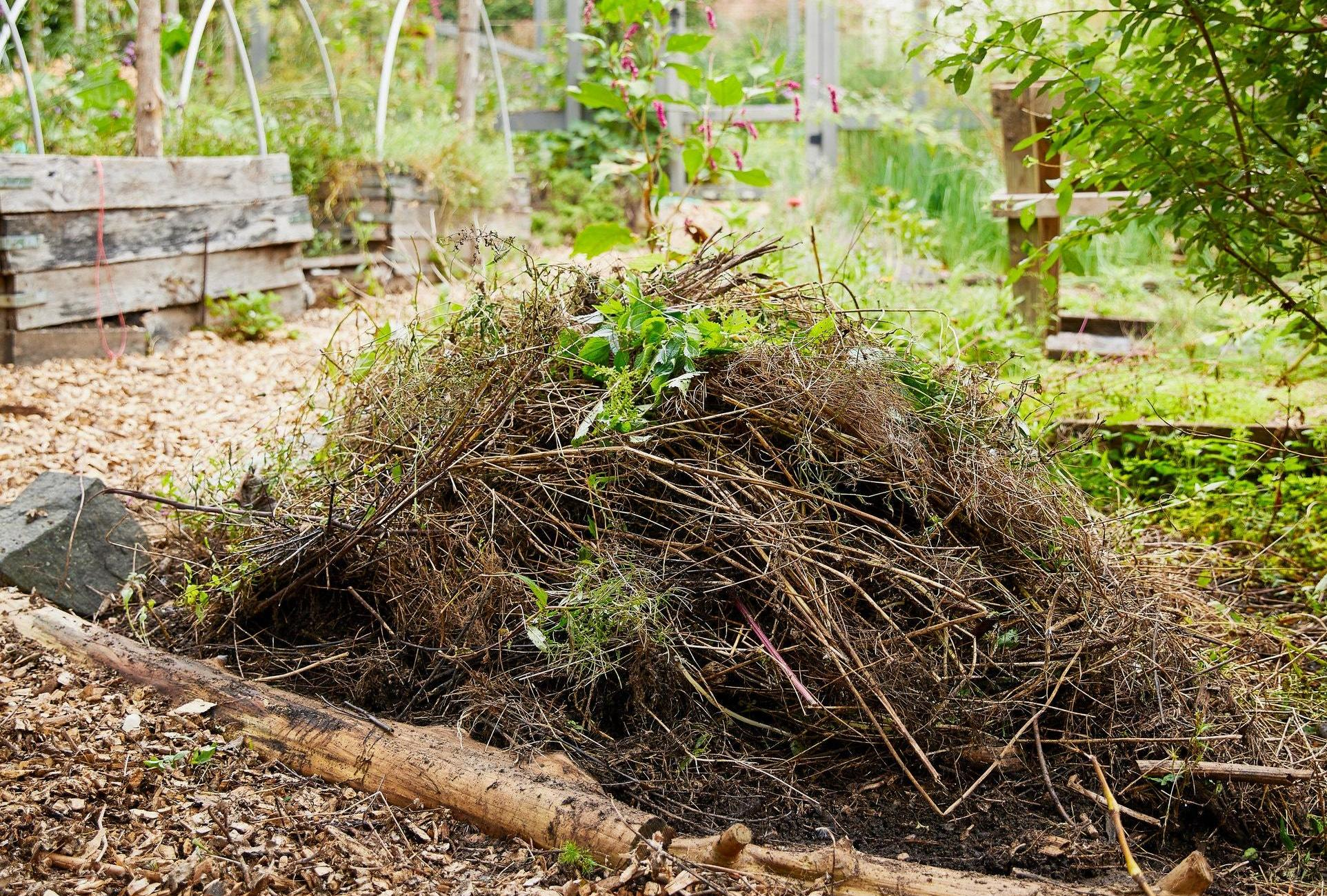 A Step-by-Step Guide to Composting