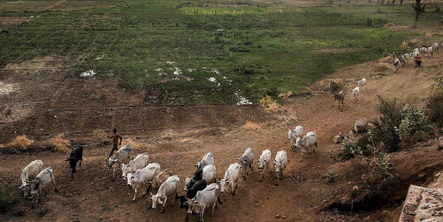 Climate Change Threatens the World's Food Supply, United Nations Warns