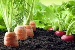 The Difference Between Organic and Sustainable Food